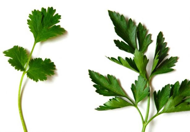 coriander_parsley_difference_971825_large