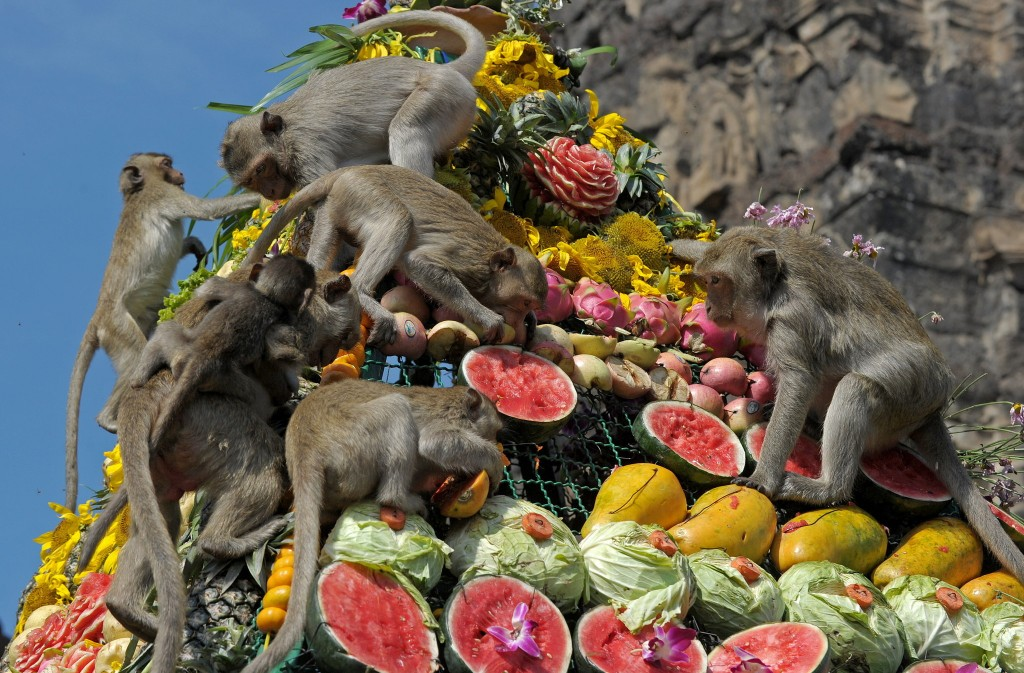 Monkeys enjoy eating fruit in front of a