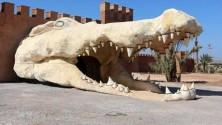 أول حديقة للتماسيح في المغرب تفتح أبوابها بمدينة أڭادير