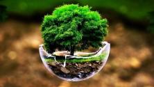 بمناسبة يوم الأرض، 12 صورة لأشجار عجيبة