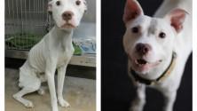 صور مؤثرة لكلاب قبل وبعد إيوائهم