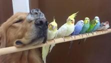 كلب،هامستر و8 طيور… العلاقة الأكثر غرابة في عالم الحيوان