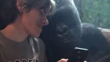 شاهد ردة فعل غوريلا بعدما أراها هذا الصبي صور بعض القردة على هاتفه