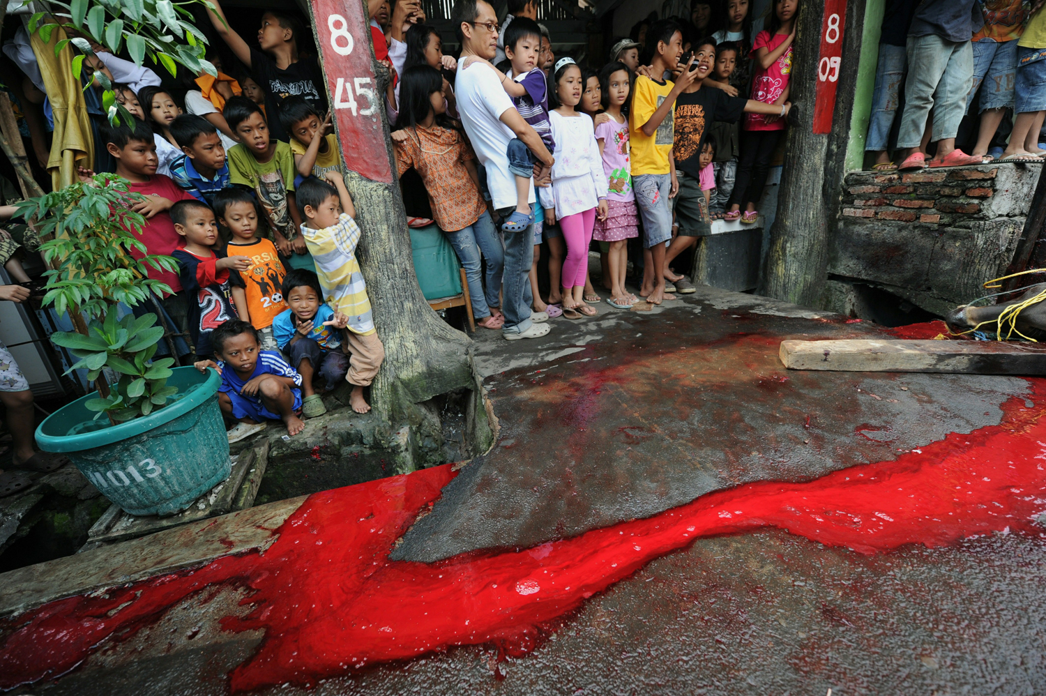 Blood flows down the street while children watch on as volunteers slaughter a cow at Daarun Najaah mosque during the Eid al-Adha festival in Jakarta on November 17, 2010. Indonesian Muslims along with thousands others around the world are marking Eid al-Adha or 'Feast of the Sacrifice', which marks the end of the annual hajj or pilgrimage to Mecca and celebrated in remembrance of Abraham's readiness to sacrifice his son to God. AFP PHOTO / ROMEO GACAD (Photo credit should read ROMEO GACAD/AFP/Getty Images)