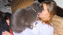 10 قطط مشاغبة تفعل ما يحلو لها