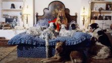 الممثلة الفرنسية بريجيت باردو تدافع عن كلاب المغرب الضالة