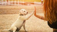 10 أشياء تدل على أنك تعتني بحيوانك الأليف أكثر من نفسك