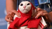 """القط أخيل يمتنع عن التنبؤ بالفائز في مباراة المغرب والبرتغال بعد أن هدده المغاربة بطهوه مع """"الرفيسة"""""""