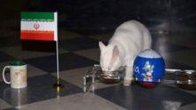 معلومات غريبة عن القط أخيل عراف المونديال: موظف يتقاضى أجراً وجده كان بطلاً يحترمه الروسيون