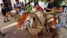 من أطفال المصلى إلى أصحاب التهاني، مغاربة لا يظهرون إلا يوم عيد الأضحى